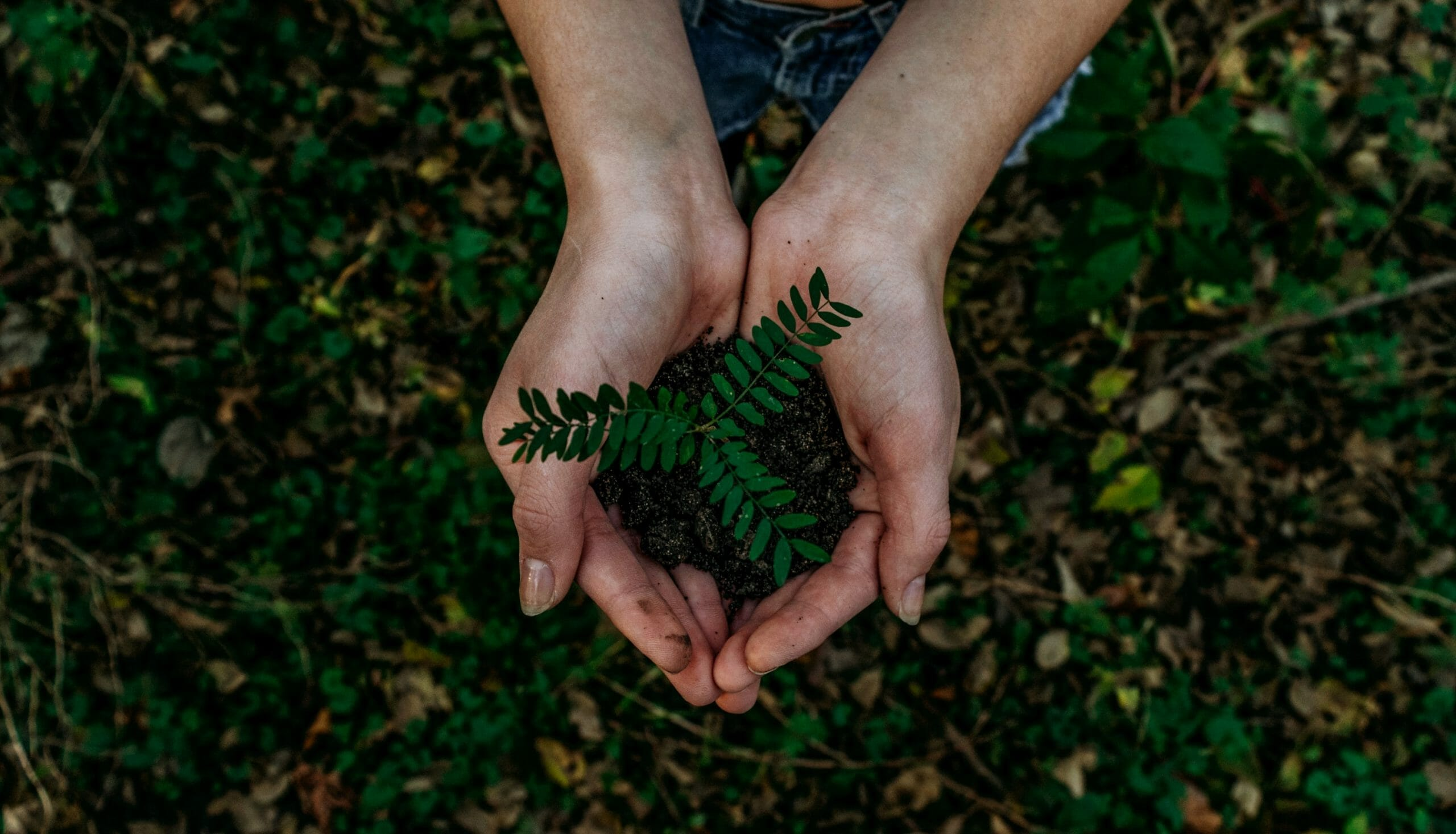 Earth Day 2021: 10 Ways Your Business Can Go Green After the Pandemic- DY Blog